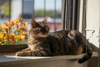Mascotas en edificios: ¿Están prohibidas en todos los condominios?