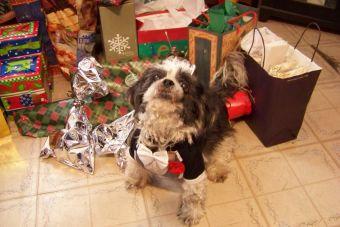 Este perrito no aguantó las ansias y quiso abrir todos los regalos de Navidad