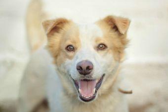 Estudio: Mascotas ayudan a desarrollar habilidades sociales en niños autistas
