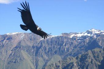 15 especies prohibidas de cazar en Chile