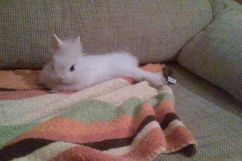 8 motivos para adoptar a un conejo enano