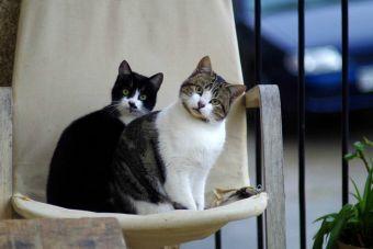 10 tips para lidiar con un gato hiperactivo en casa