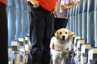 Conoce la normativa chilena para viajar con tu mascota en transportes públicos