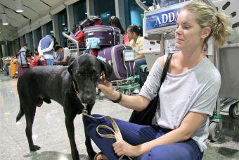 Aeropuerto Internacional JFK abrirá el primer terminal de carga de animales