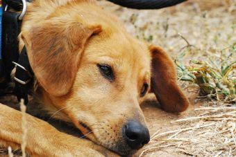 Trampas de animales, un peligro latente para tu mascota