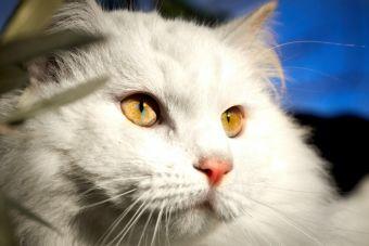 Las 7 enfermedades más graves que pueden afectar a tu gato