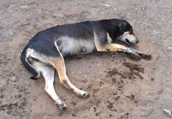Matanza: más de 50 perros han fallecido en Taltal en las últimas semanas