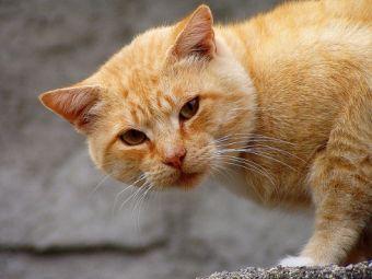 Felinos libres e independientes: ¿corren peligro?