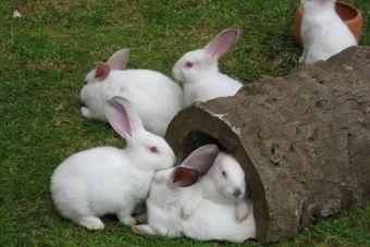 6 alimentos prohibidos para tu conejo