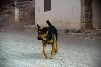 Rusia ordena matanza de perros callejeros por los JJ.OO de Sochi