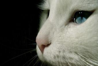 ¿Cómo debo limpiar los ojos de mi gato?