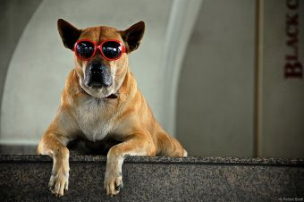 Masajes anti estrés para animales