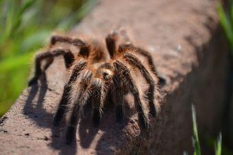 La fobia ajena: El mayor peligro que corre tu araña
