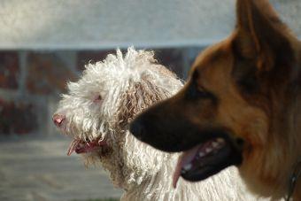 Pet Friendly: Empresas que permiten llevar las mascotas al trabajo