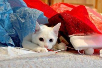 Gatos y lana: Dupla inseparable que podría traer algo más que diversión a tu mascota