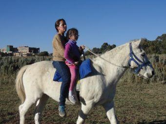 El caballo: Un terapeuta integral