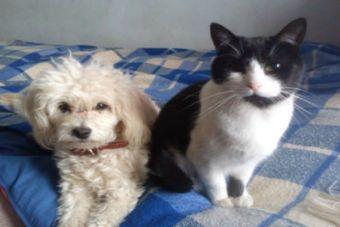 Mascotas también debieron evacuar ante alarma de tsunami en el Norte del país