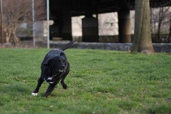 La importancia de la actividad física en algunas razas de perros