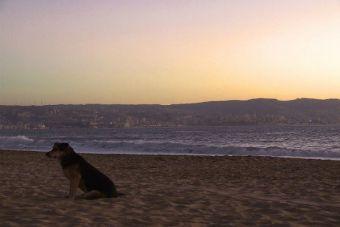 El comportamiento y el cuidado de nuestras mascotas pre y post terremoto