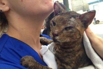 Difícil situación viven las mascotas afectadas por incendio en Valparaíso