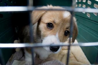 La importancia de transportar a tus mascotas en jaula para viajar este fin de semana santo