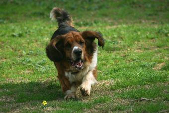 10 lugares ideales para hacer deporte junto a tu mascota