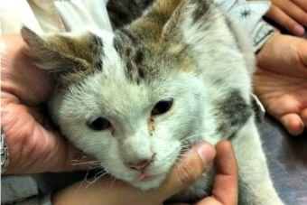 Veterinarios en valpo siguen atendiendo gratis a mascotas afectadas por incendio