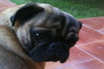 España: Por primera vez un hombre podría ir a la cárcel por maltrato animal