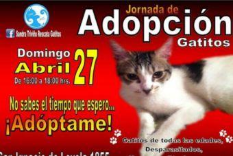 ¡Atención con esta jornada de adopción gatuna!