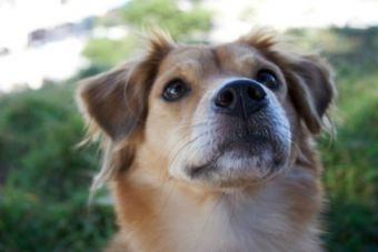 Punta Arenas tiene nuevo canil e instalará un crematorio para perritos