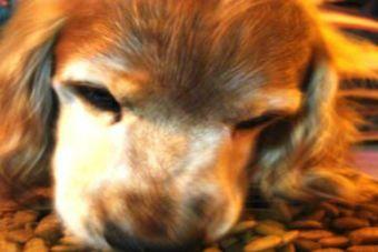¡Horrible!: Denuncian matanza de 20 perritos en la comuna de Nueva Imperial
