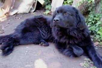 Activistas salvaron a tres perritos enterrados vivos en fosa común de China
