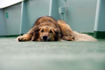 ¡A cuidar esos riñones! Enfermedades renales en perros
