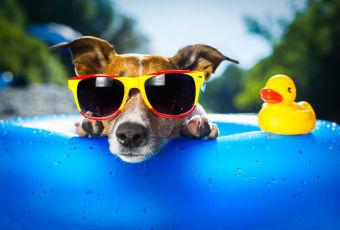 Enciclopedia canina: Labrador Retriever