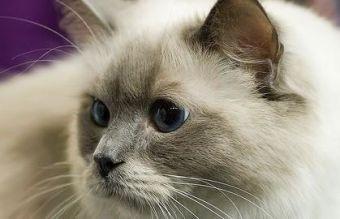 Tips para la higiene y el cuidado de tu gato en casa