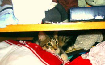 ¿Cómo enfrentar un cambio de casa con un gato?