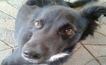 70% de los perros callejeros en Santiago tienen dueño, según estudio