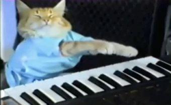 ¿Cuáles son los gatos más famosos de Internet?