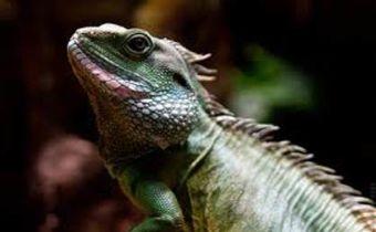 Veterinarios para reptiles