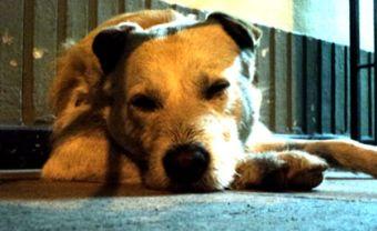 Enfermedades que afectan a las mascotas en época de frío