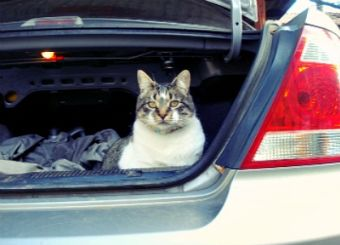 Tips para viajar de forma segura en el auto con tu mascota