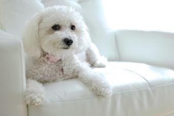 ¿Sabías que los perros reconocen si estás feliz o enojado solo al ver tu rostro?