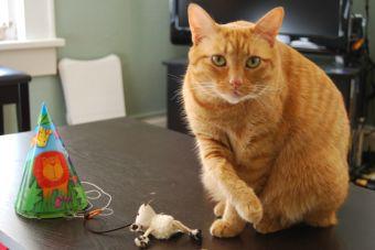 20 de febrero, Día Internacional del Gato