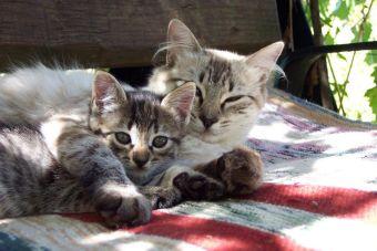 Historias de Mascotas: Camila y Surigato, adopción felina