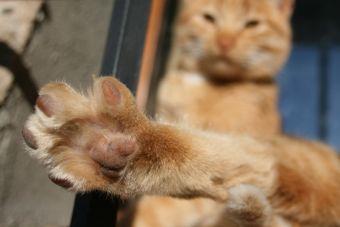 0f957f2fea6e Qué hacer para que mi gato no se vaya? - Mascotadictos