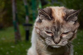 Aprende a cuidar la hipertensión de tu gato