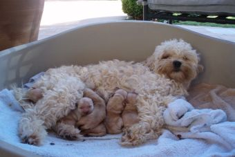 14 Tips para la primera cruza de tu perro
