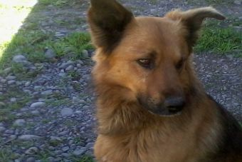 Cariño, amor y tranquilidad: 10 beneficios de tener una mascota
