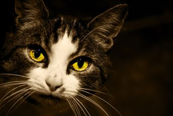 Cuidado de los ojos de tu gato