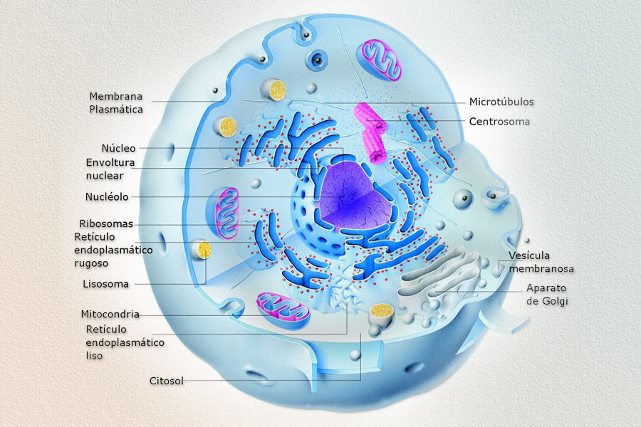 Los 15 conceptos que deberas repasar para la psu de ciencias psu urtaz Image collections